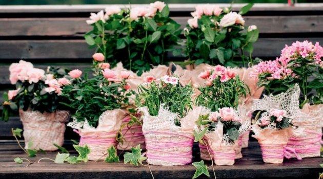 Розовые цветы для дома, какие цветы выбрать советы