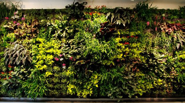 Вертикальное озеленение офиса