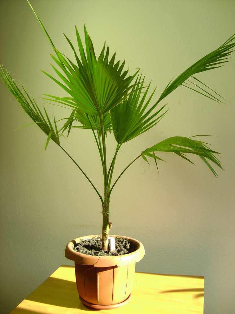 разновидность пальмы картинки отдыха ранчо предлагает
