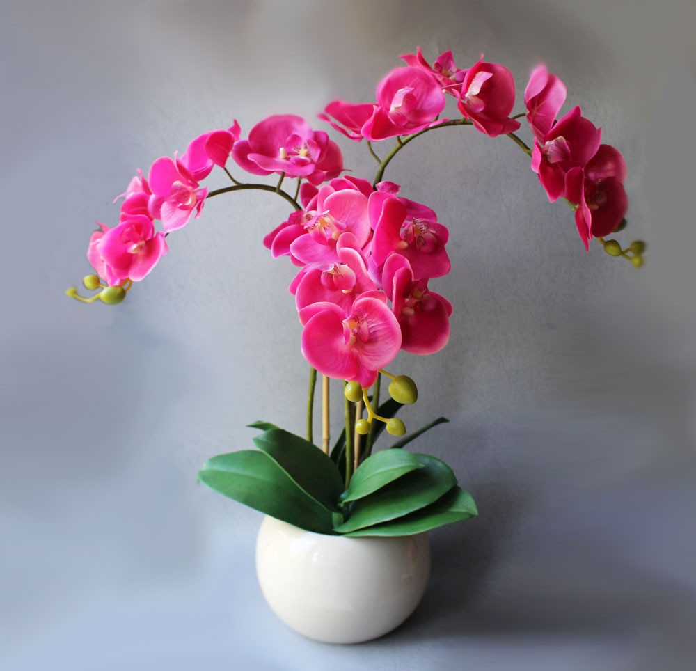 Орхидея, хобби, мечта